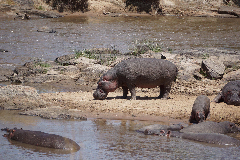 2. Hippo3