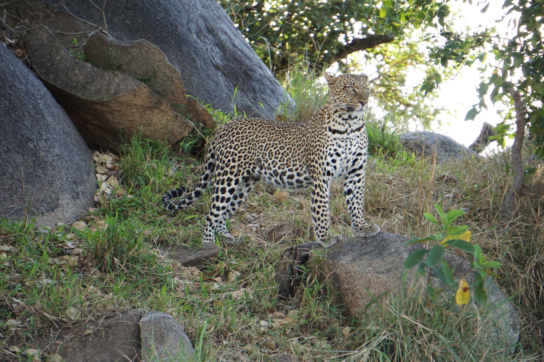 3. Male Leopard