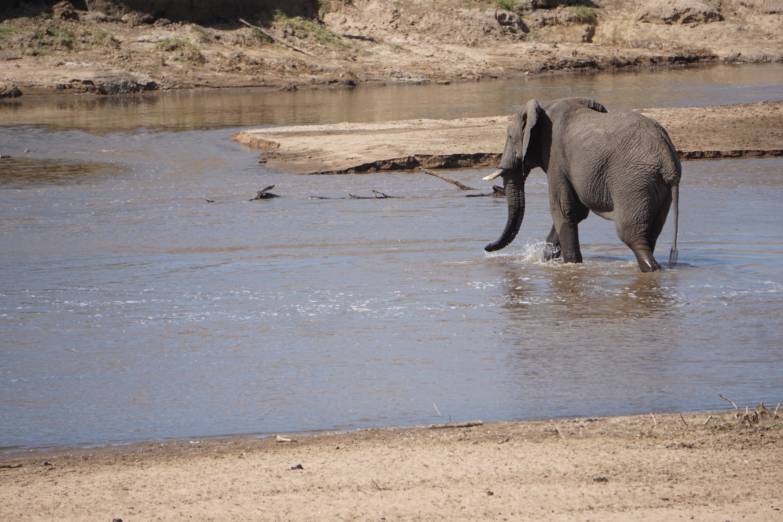 6. elephant crossing