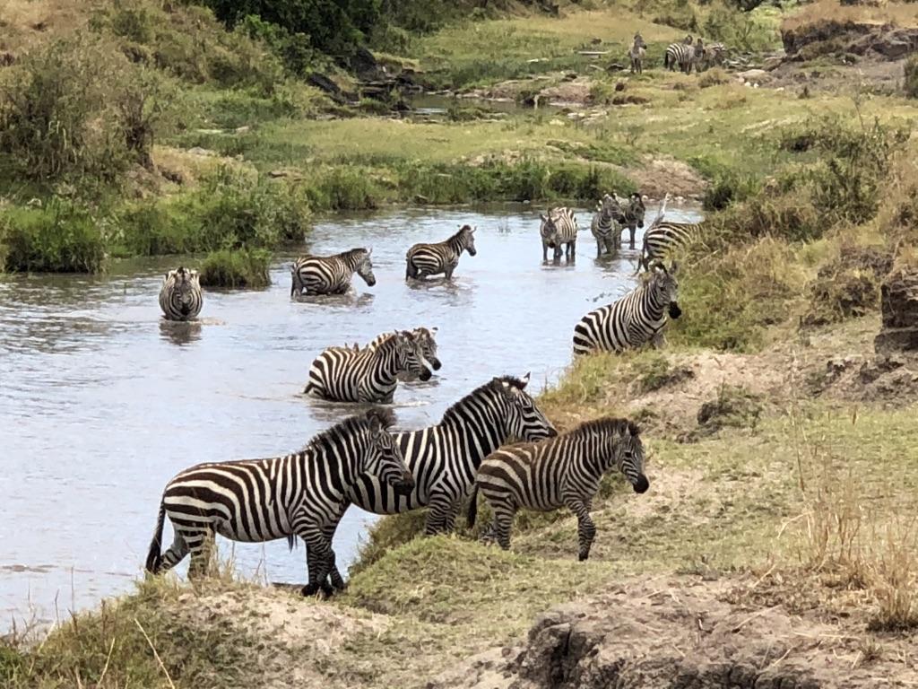 8. Zebra cross a creek (not the river)